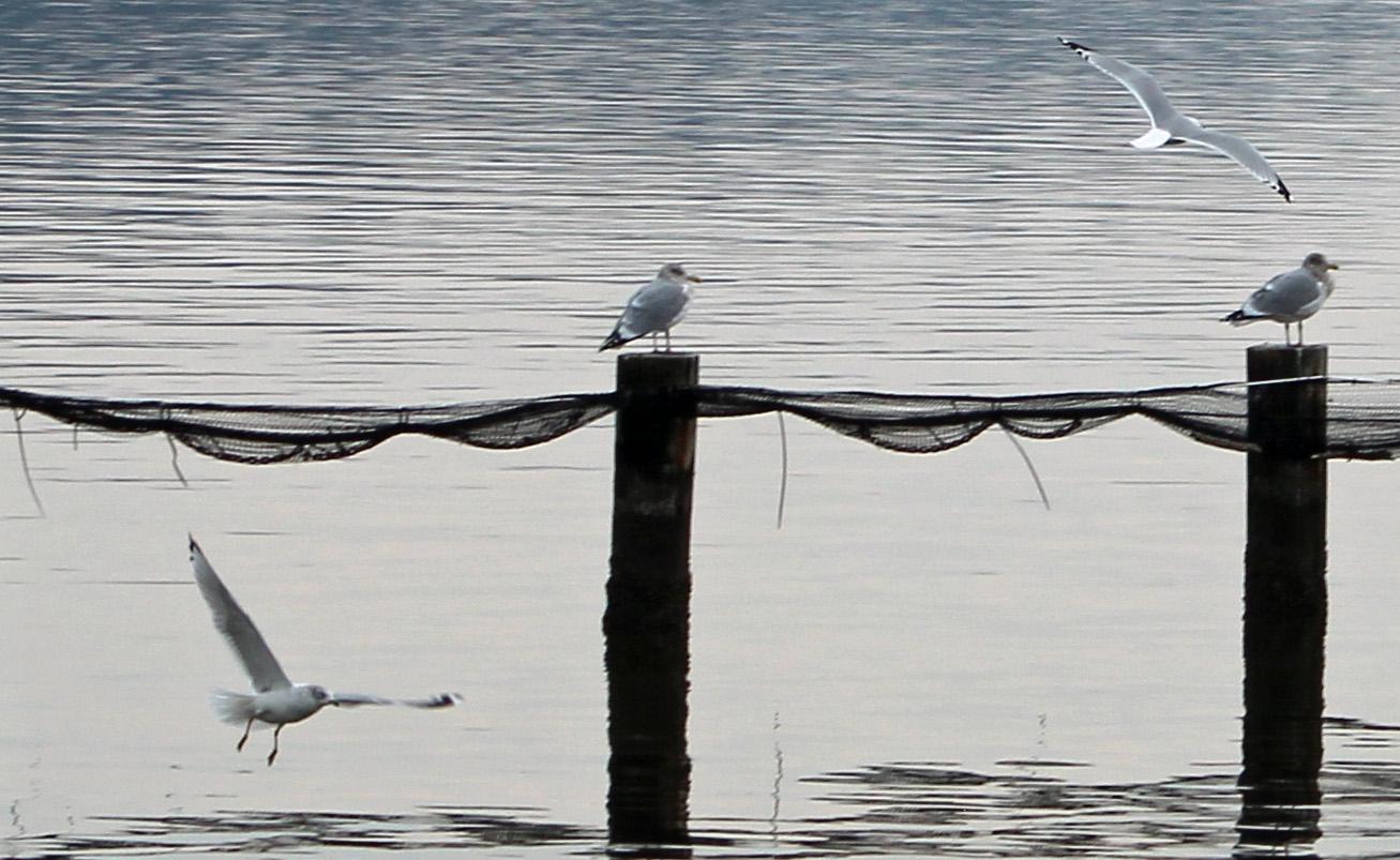 Birds & Bay