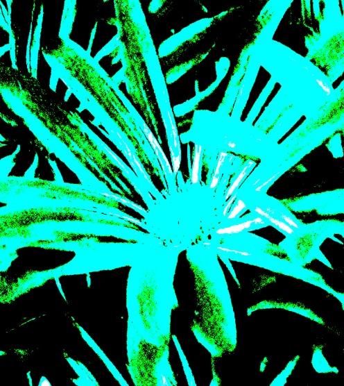Blossom Nov 19a h2o poster