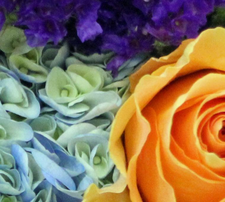 Blue_Orange