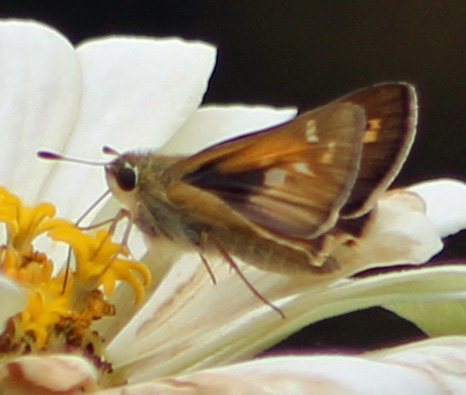Butterfly 5 b