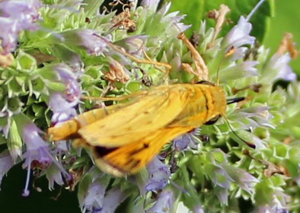 Butterfly 99