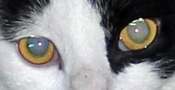 GarGar eyes