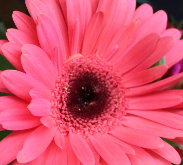 Pink 6 gubera