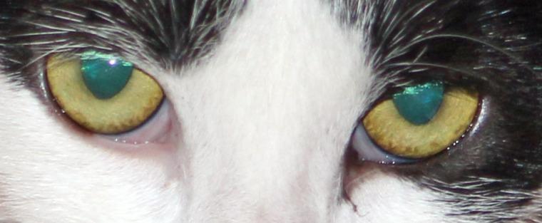 Pirouette eyes.jpg