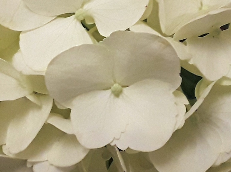 White 12 b