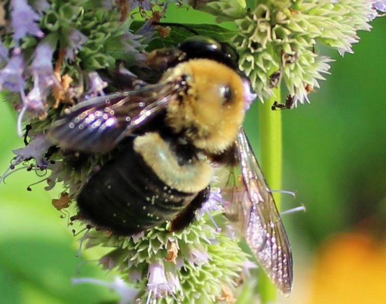 Bee cool 2