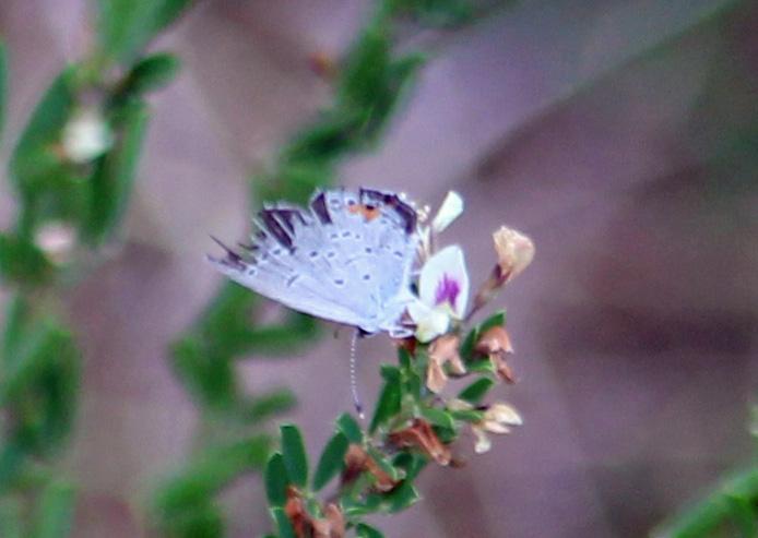 Butterfly 1 a better