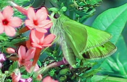 Butterfly 1 psych