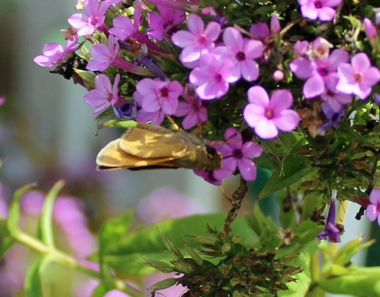 Butterfly 21