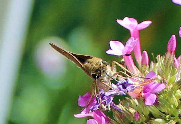 Butterfly 22