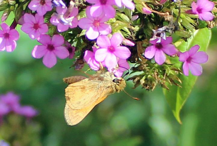 Butterfly 23