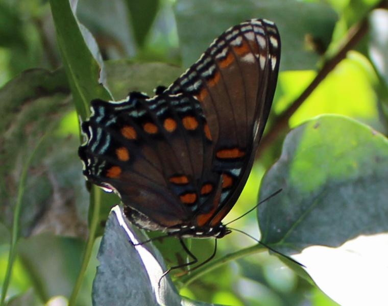 Butterfly 4
