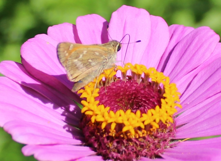 Butterfly 5 - Copy