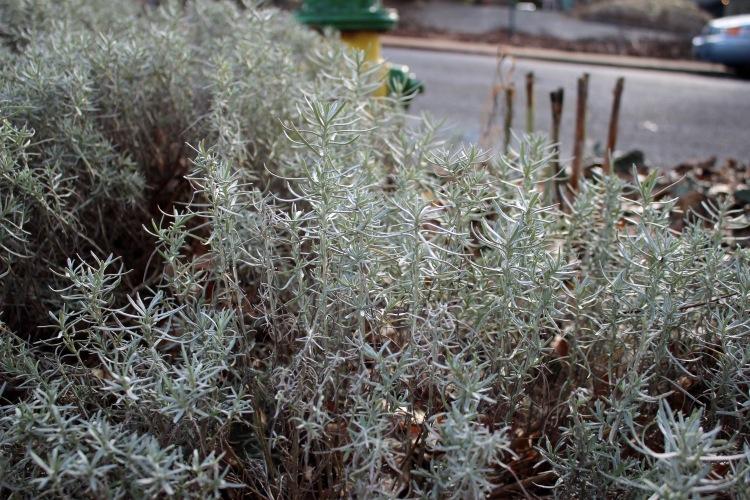 Green 2 bush