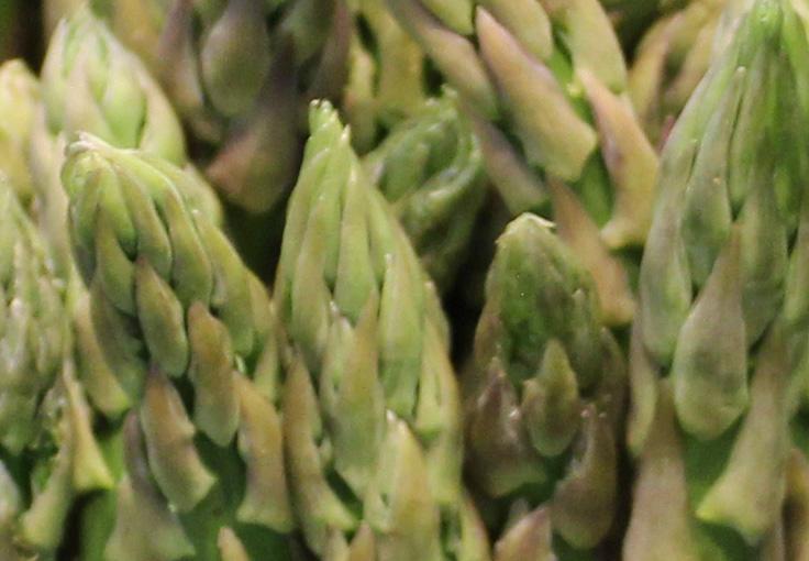 Green asperagus macro