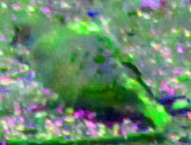 Heavily edited photo of a Dove