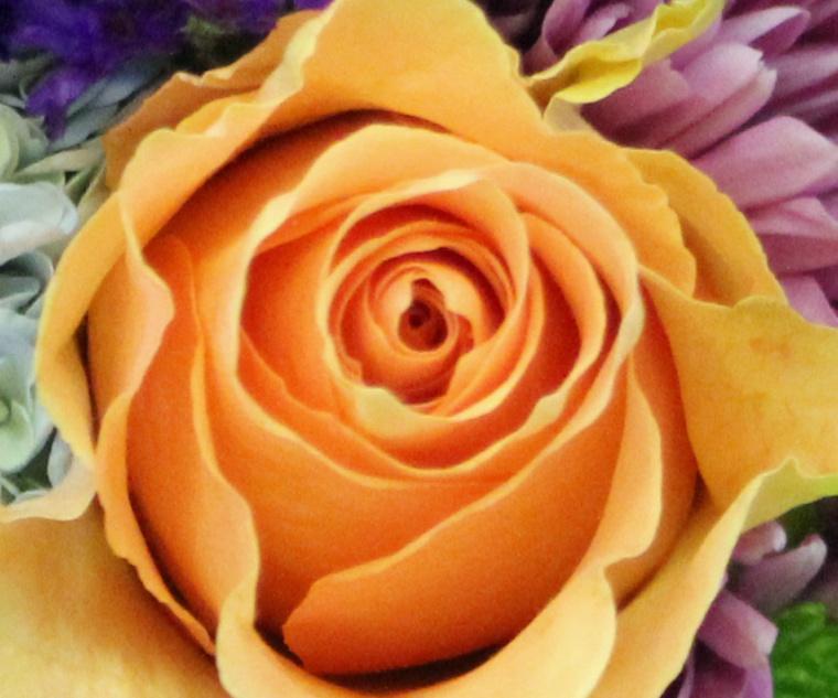 Orange 4 rose