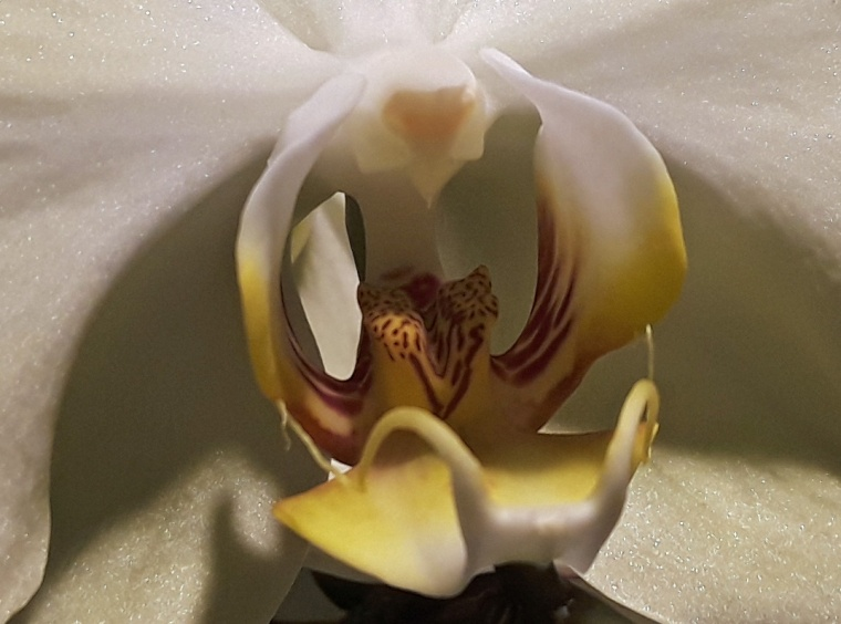 Orchid 1 brilliant
