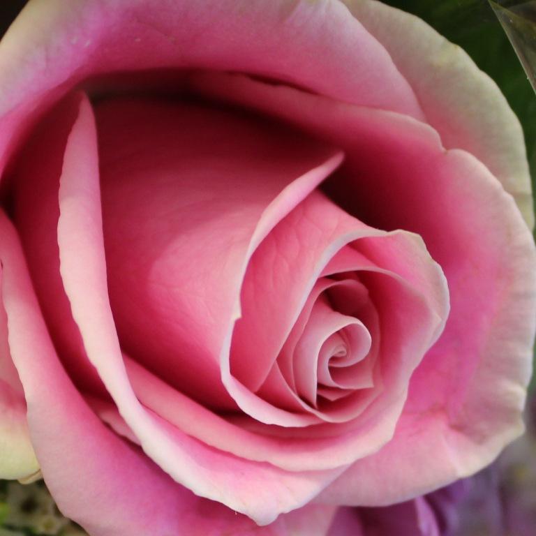Pink 15