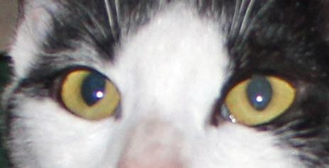 Pirouette 3 eyes