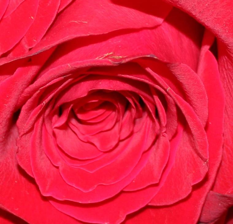 Red 4 macro
