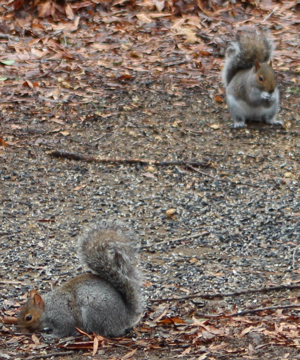 Squirrel 2 a