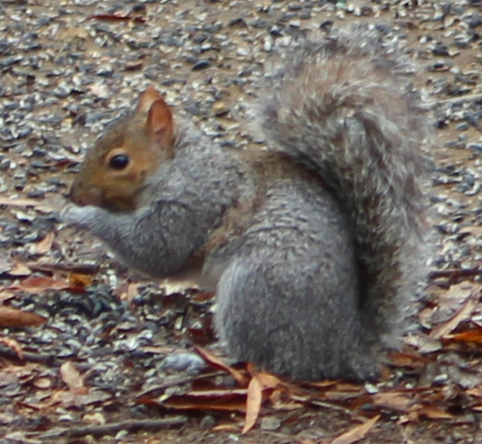 Squirrel 3 b