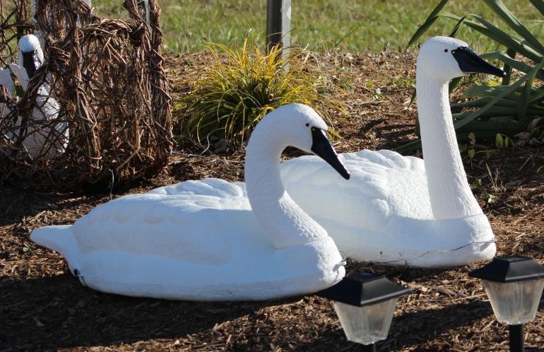 Swan fake 2