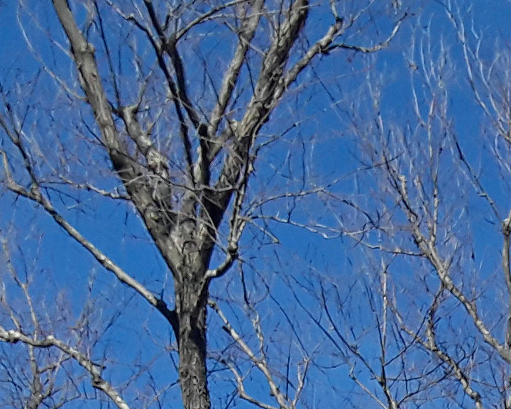 Tree 1 crop