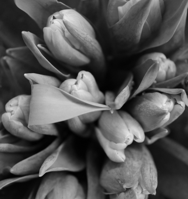 Tulips 2 bw