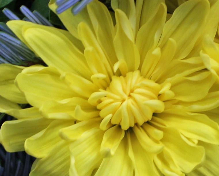 Yellow 7 b