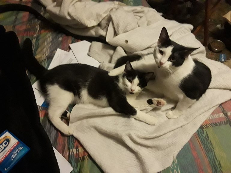 Babies 2