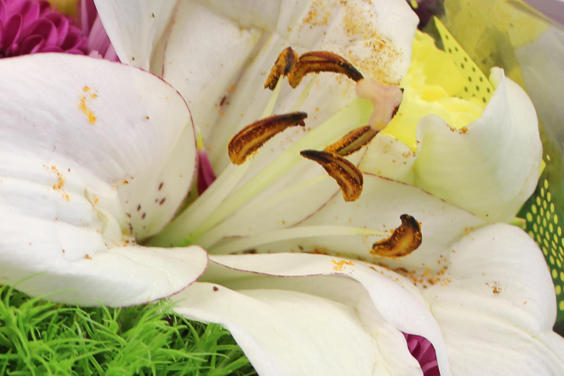 Bouquet 2 c