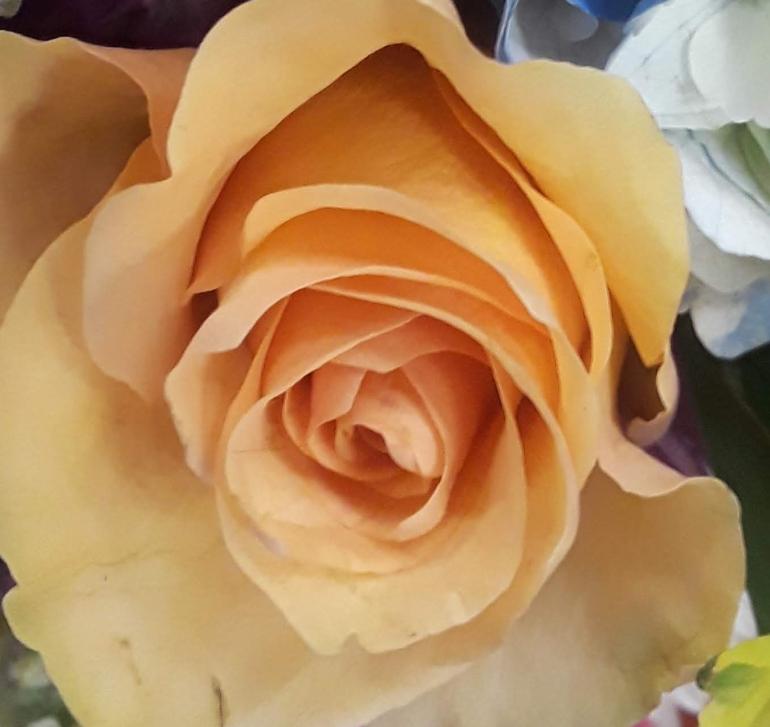 Bouquet 2 crop