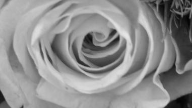 Bouquet 2 d bw