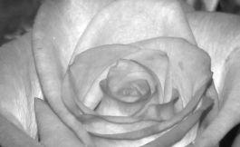 Bouquet 3 news