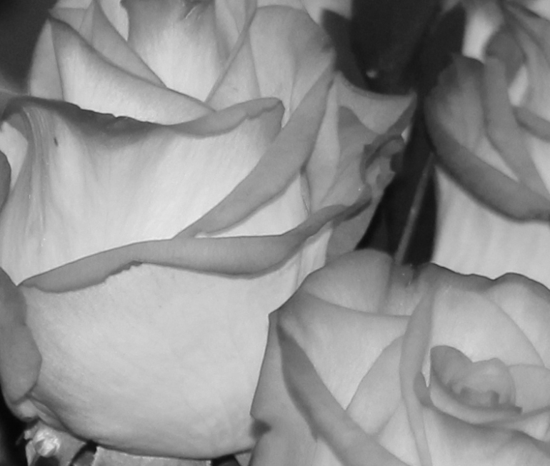 Bouquet 4 macro