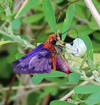 Butterfly 15 psych