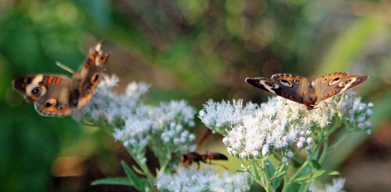 Butterfly jamboree 4