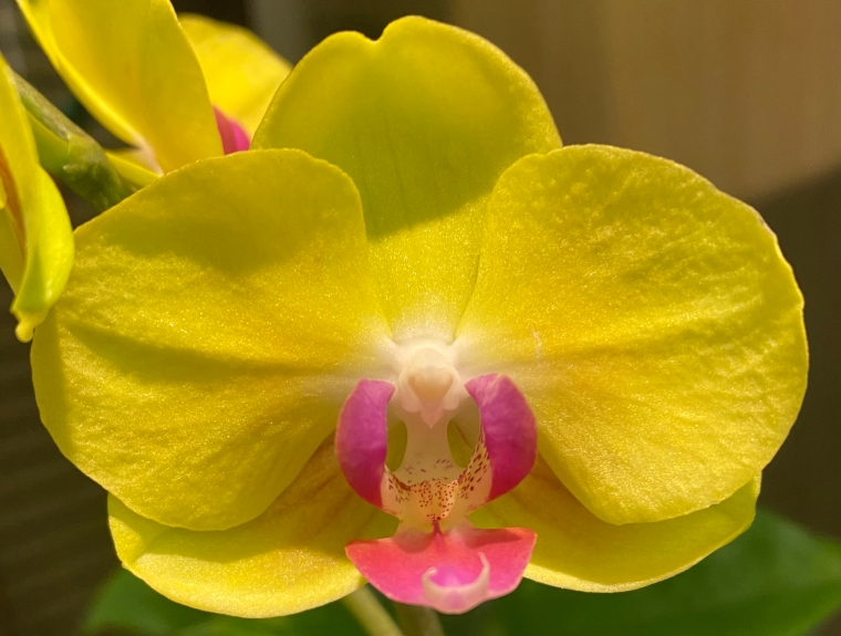 Orchid 2_28_3