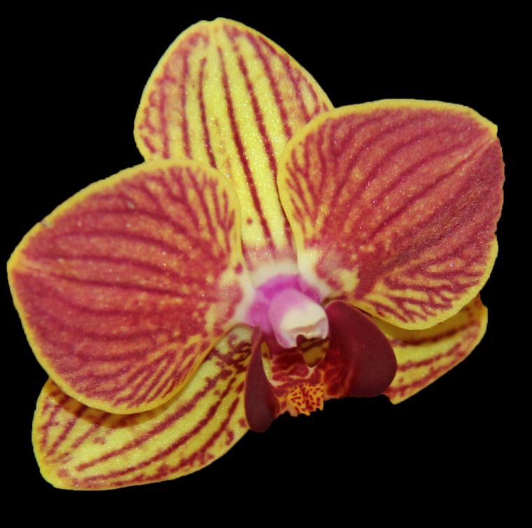 Orchid 4 a