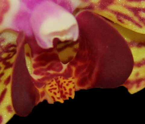Orchid 4 b