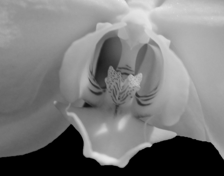 Orchid 5 b bw