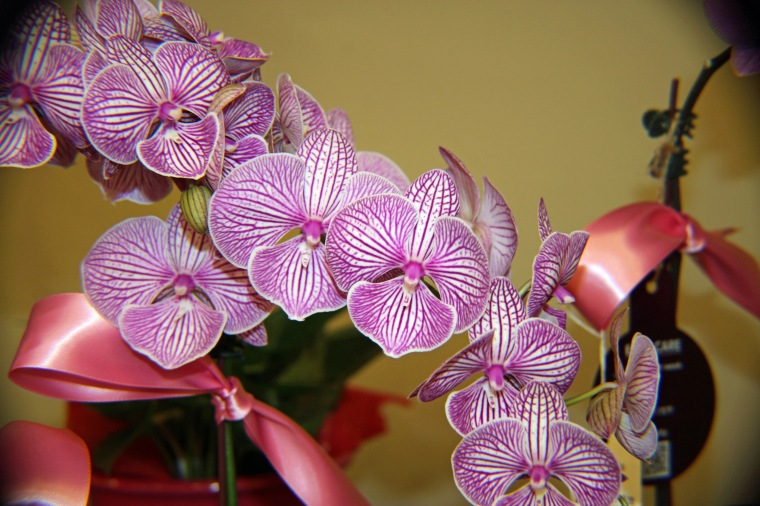 Orchid 9 a