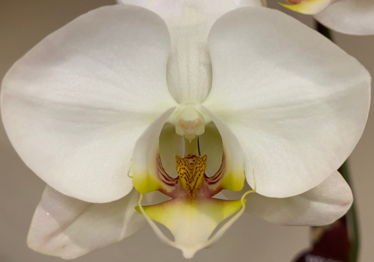 Orchid_4