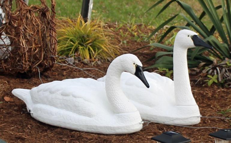 Sculpture swans