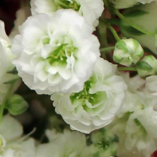 White 8 baby