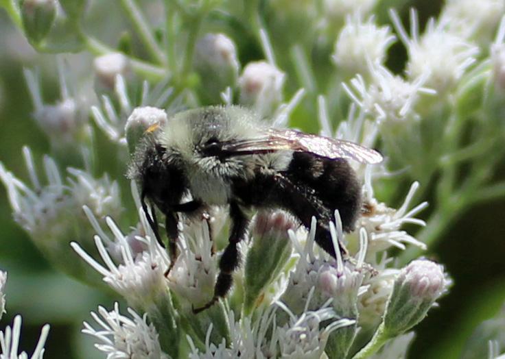 Bee Hillsmere