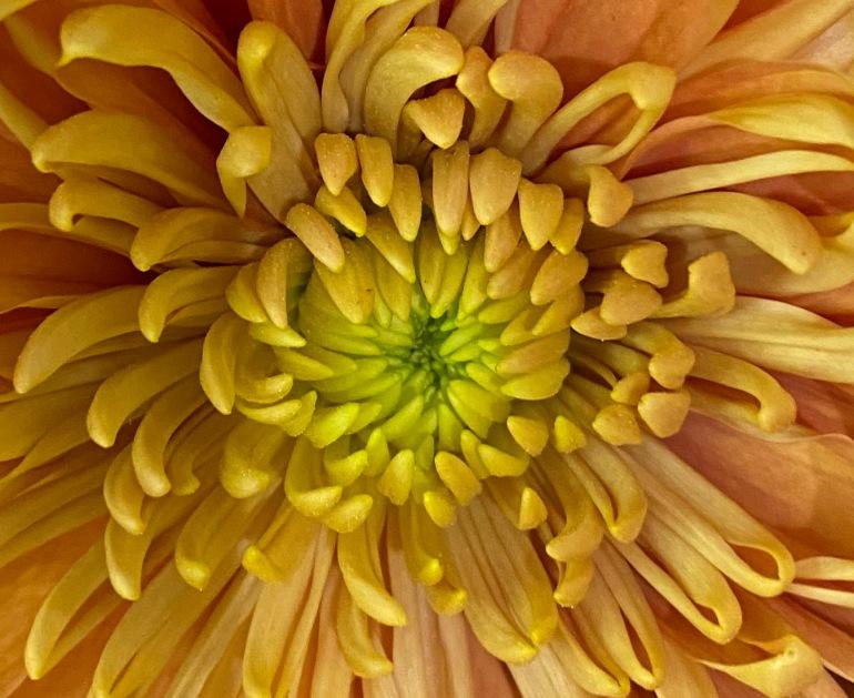 Blossom 3_21_2 crop