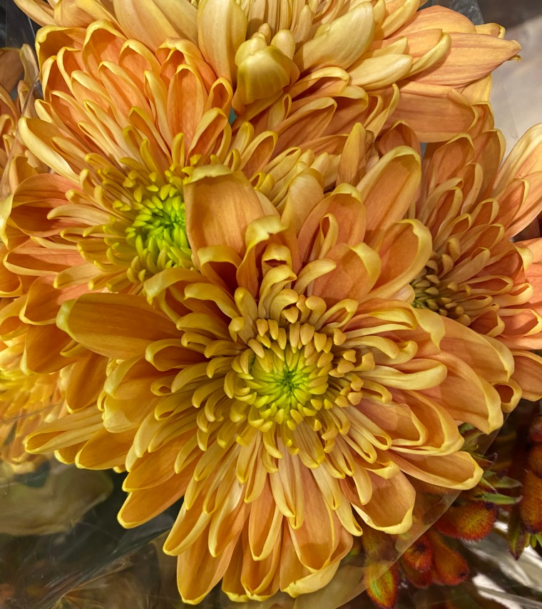 Blossom 3_21_2